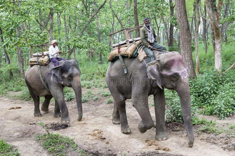 Elefantes en selva imágenes de archivo libres de regalías