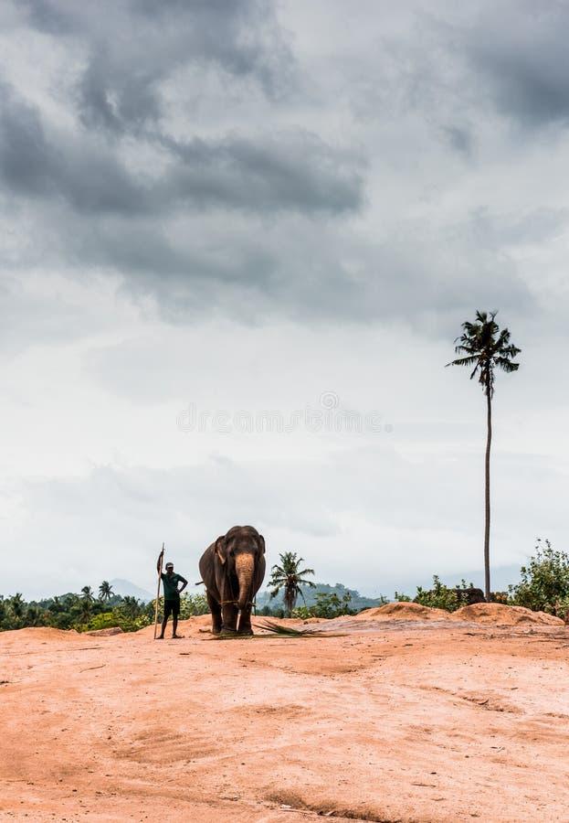 Elefantes en Sri Lanka imagen de archivo