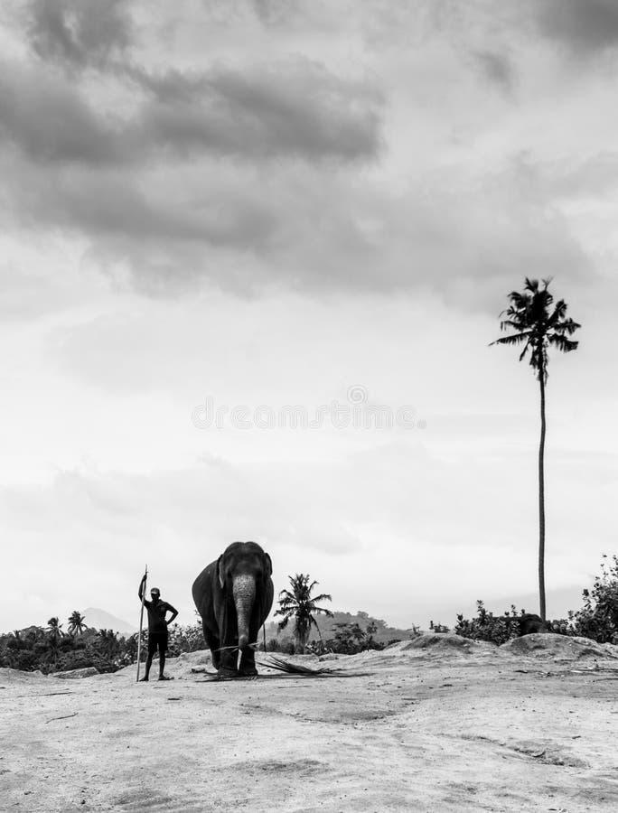 Elefantes en Sri Lanka fotos de archivo