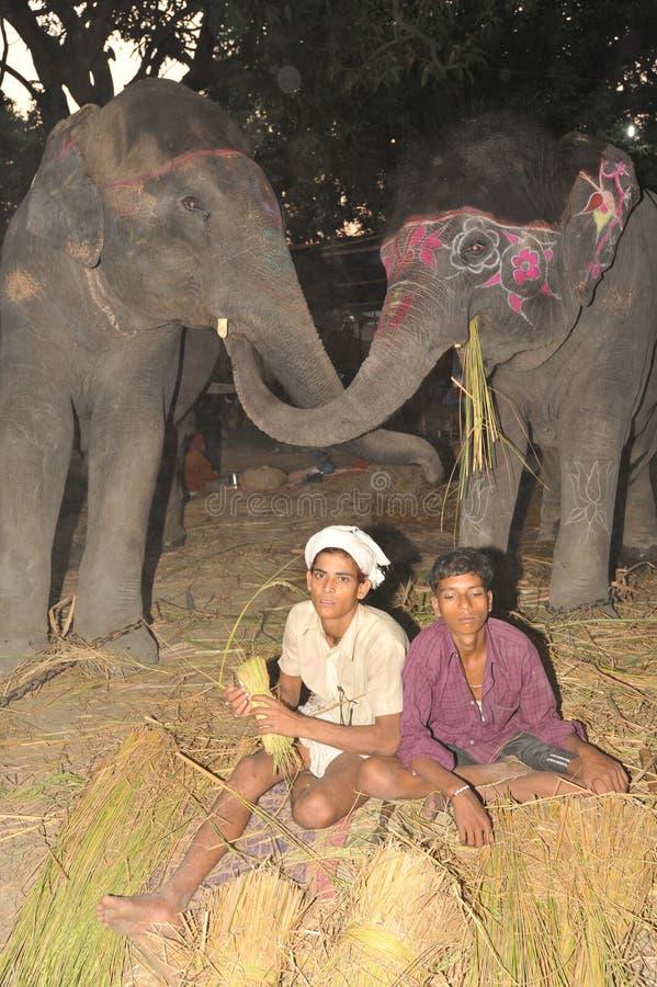 Elefantes felizes fotos de stock royalty free