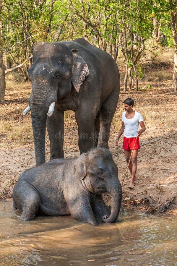 Elefantes limpe e do lavagem nos bancos do rio foto de stock royalty free