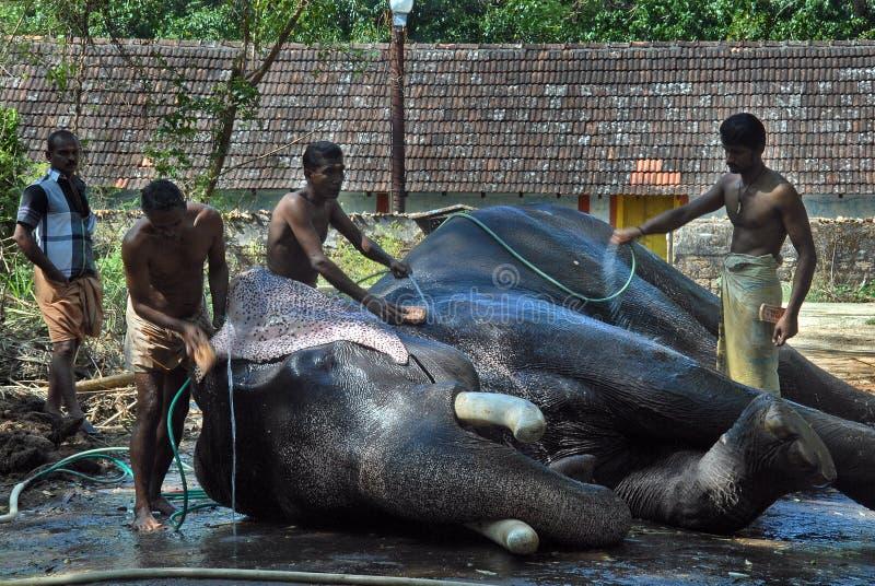 Elefantes na cultura de Kerala foto de stock royalty free
