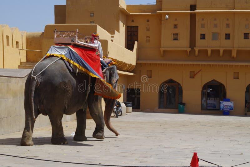 Elefantes no forte Rajasthan de Amer imagem de stock royalty free
