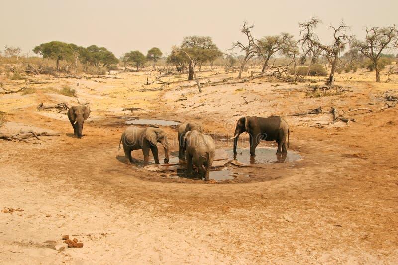 Elefantes no furo de água fotografia de stock royalty free