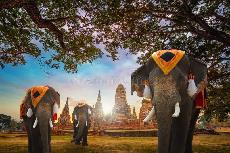 Elefantes no templo de Wat Chaiwatthanaram no parque histórico de Ayuthaya, um local do patrimônio mundial do UNESCO, Tailândia imagens de stock