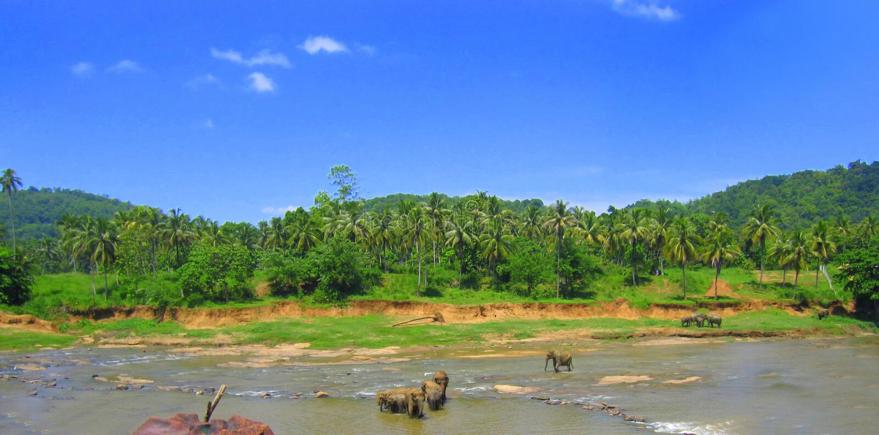 Elefantes que banham-se em Sri Lanka no orfanato do elefante imagens de stock