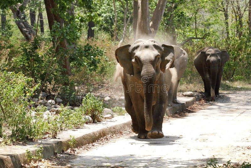 Elefantes que cargan en Safari Jeep foto de archivo libre de regalías