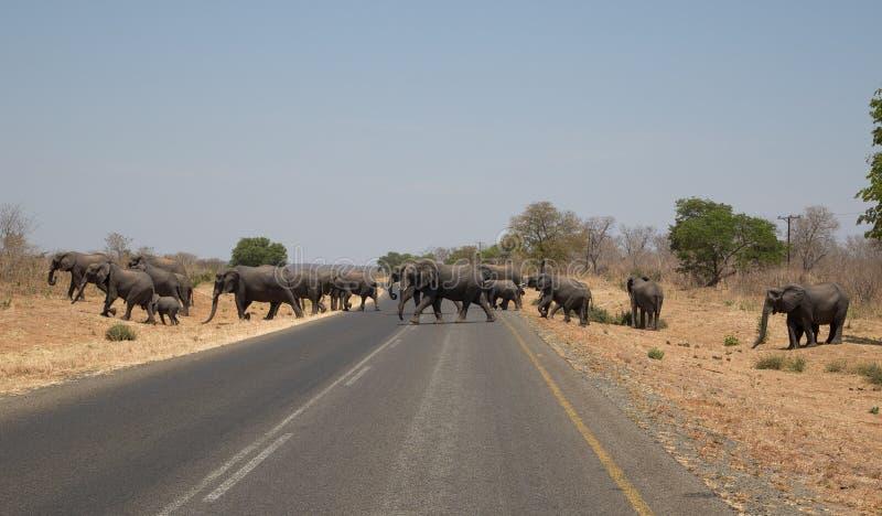 Elefantes que cruzam a estrada em África foto de stock royalty free