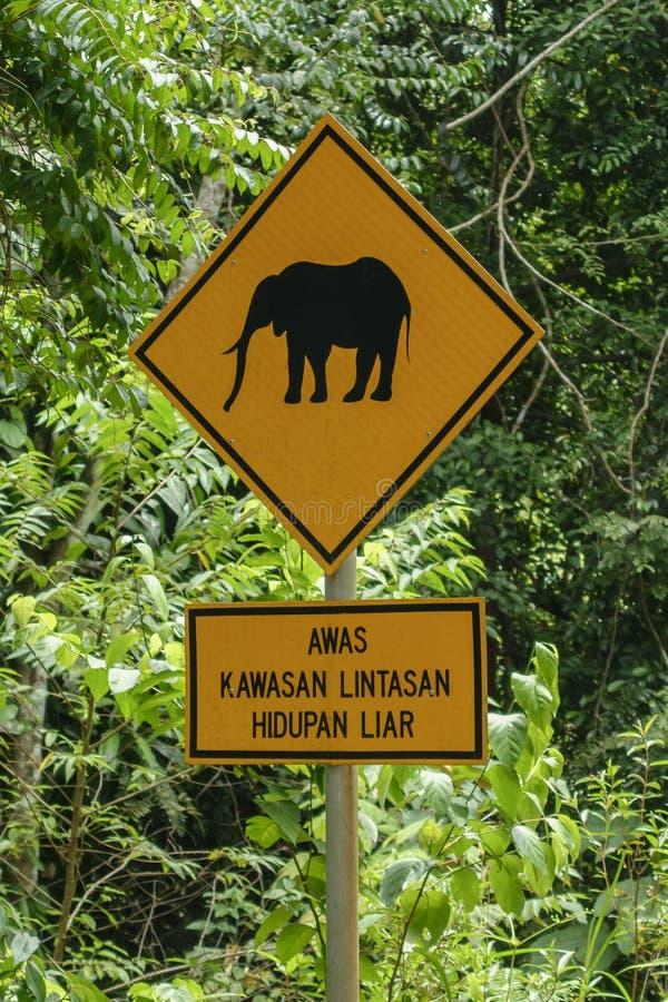 Elefantes que cruzan la señal de tráfico en el parque nacional de Endau Rompin, Johor, Malasia foto de archivo