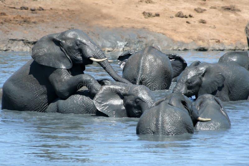 Elefantes que juegan en agua imágenes de archivo libres de regalías