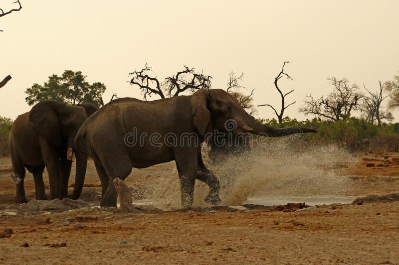 Elefantes que salpican divirtiéndose foto de archivo