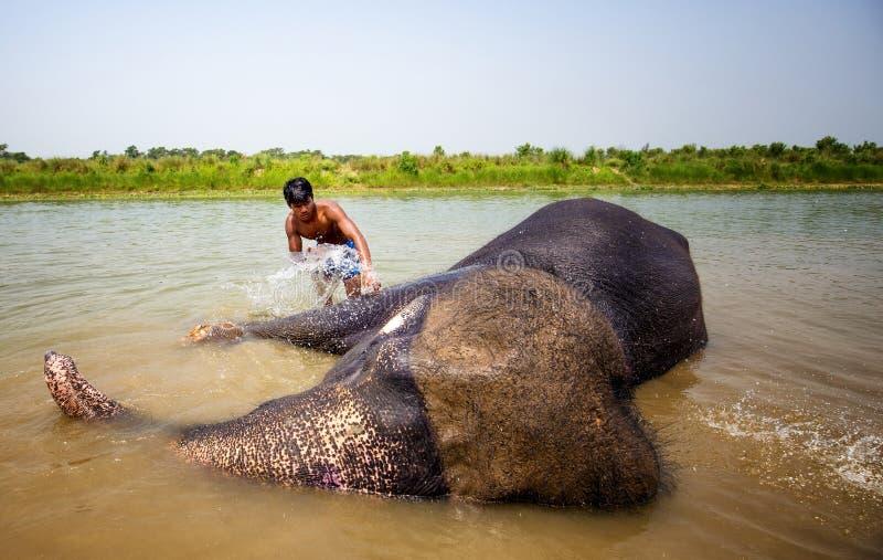 Elefantes que se lavan en el río foto de archivo libre de regalías