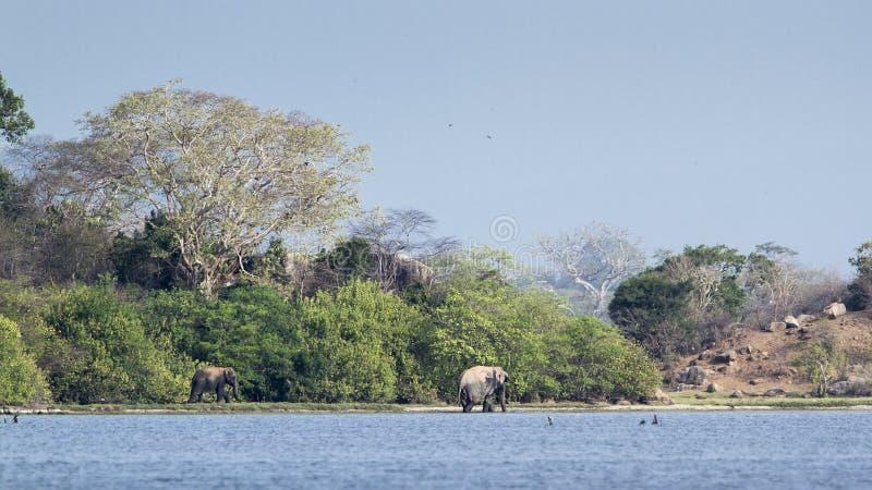 Elefantes salvajes y paisaje en Sri Lanka fotografía de archivo