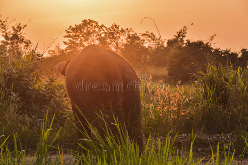 Elefantes tailandeses fotografía de archivo