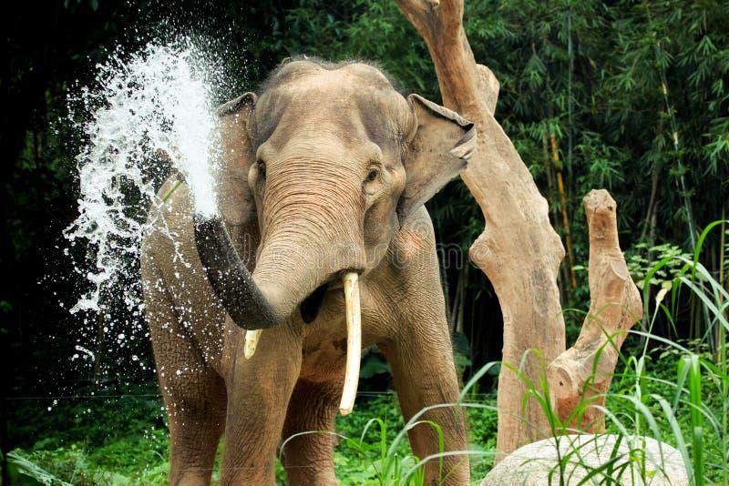 Elefantfärgstänk fotografering för bildbyråer