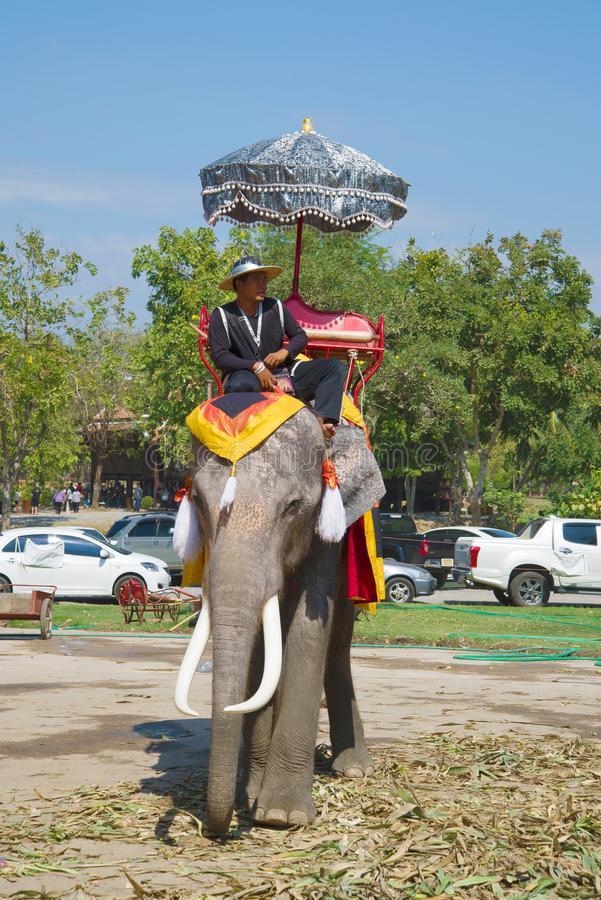 Elefantfahrer-Wartetouristen Elefantreiten stockbilder