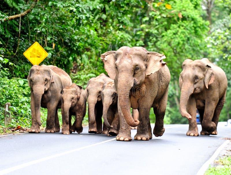 Elefantfamilie stockfotos