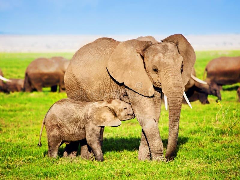 Elefantfamilie auf Savanne. Safari in Amboseli, Kenia, Afrika stockbilder