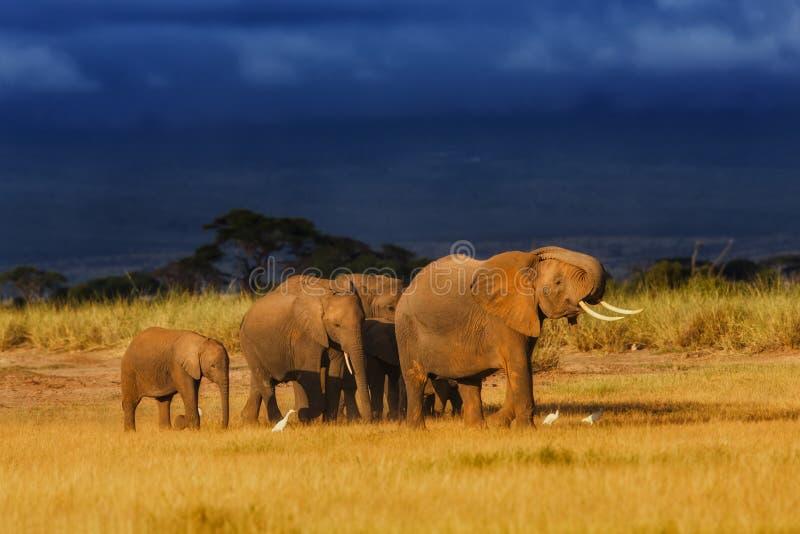 Elefantfamilie kurz vor dem Regen stockfoto
