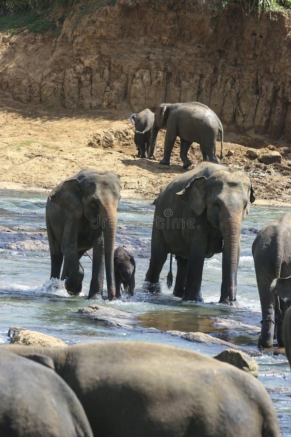Elefantfamilj arkivbilder