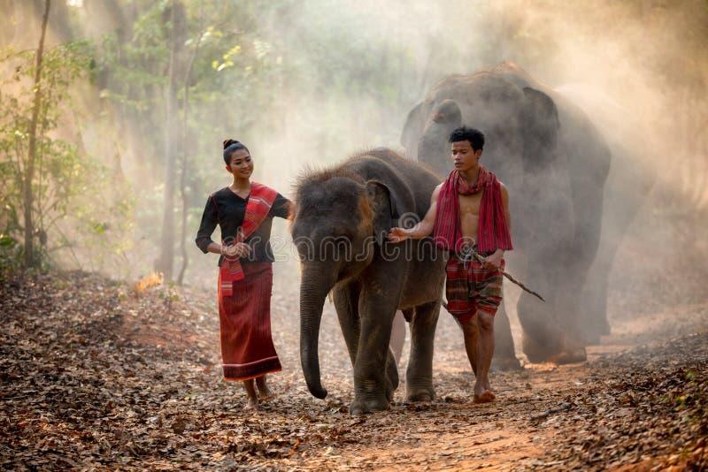 Elefantfamilj i Surin som går i skog på Chang royaltyfria foton