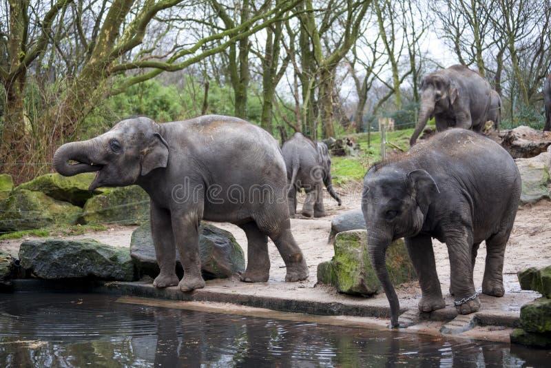 Elefantfamiljen går till det bevattna hålet i skogen av Indien royaltyfria foton