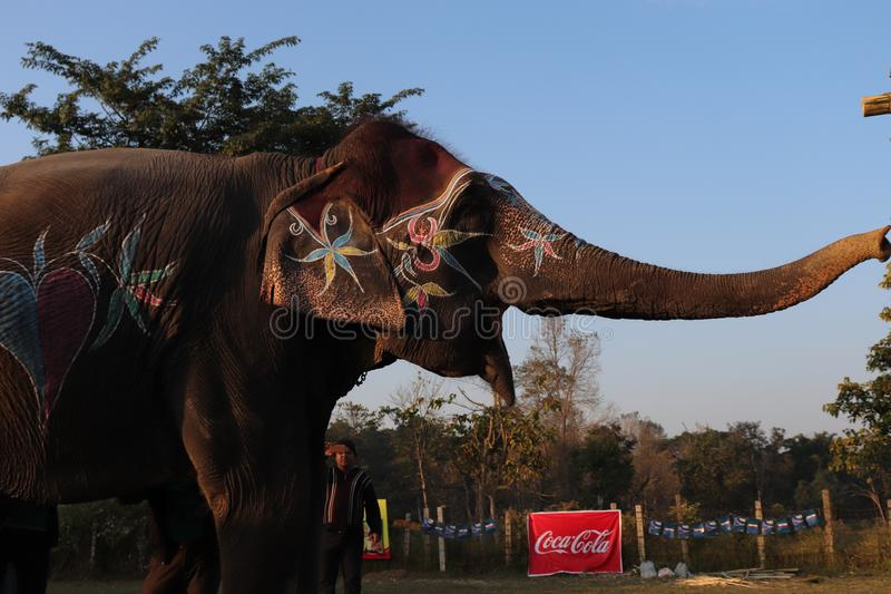 14. Elefantfestival lizenzfreie stockfotografie