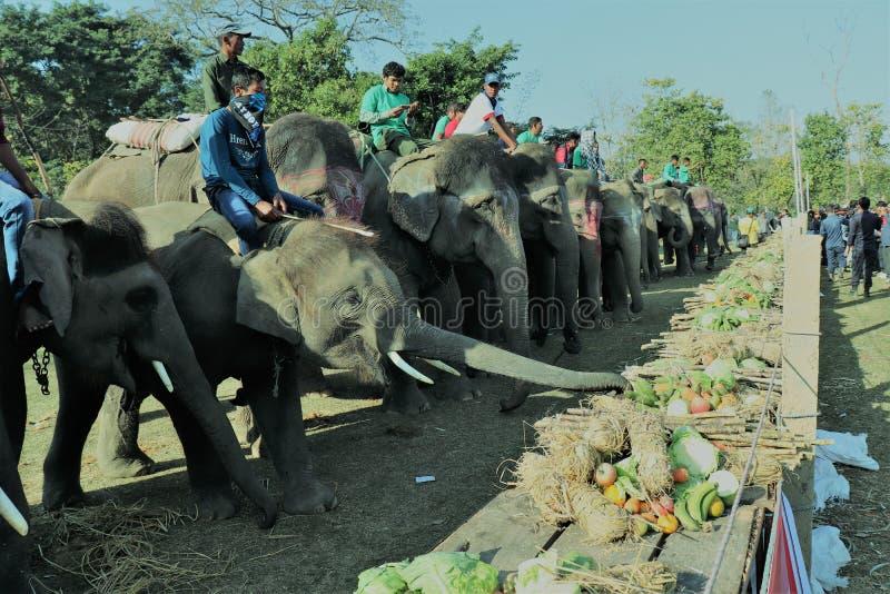 14. Elefantfestival stockfoto