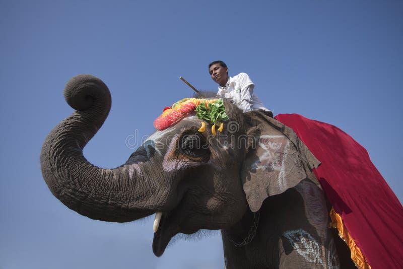 Elefantfestival, Chitwan 2013, Nepal royaltyfri fotografi