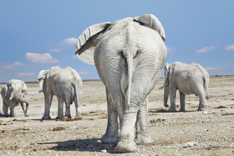 Elefantflock arkivbild