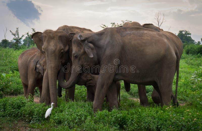 Elefantflock som skyddar en behandla som ett barn royaltyfria foton