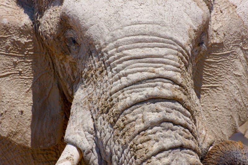 Elefantgesicht (Nahaufnahme) lizenzfreies stockbild