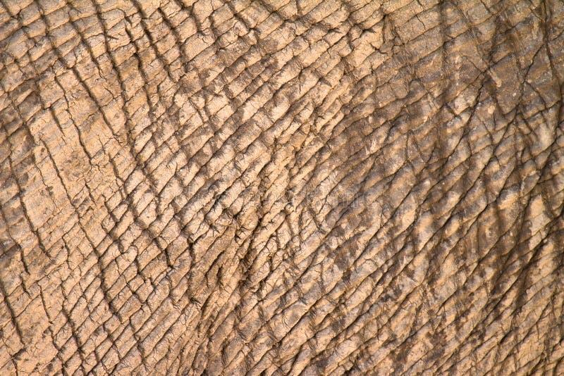 Elefanthaut stockfotos