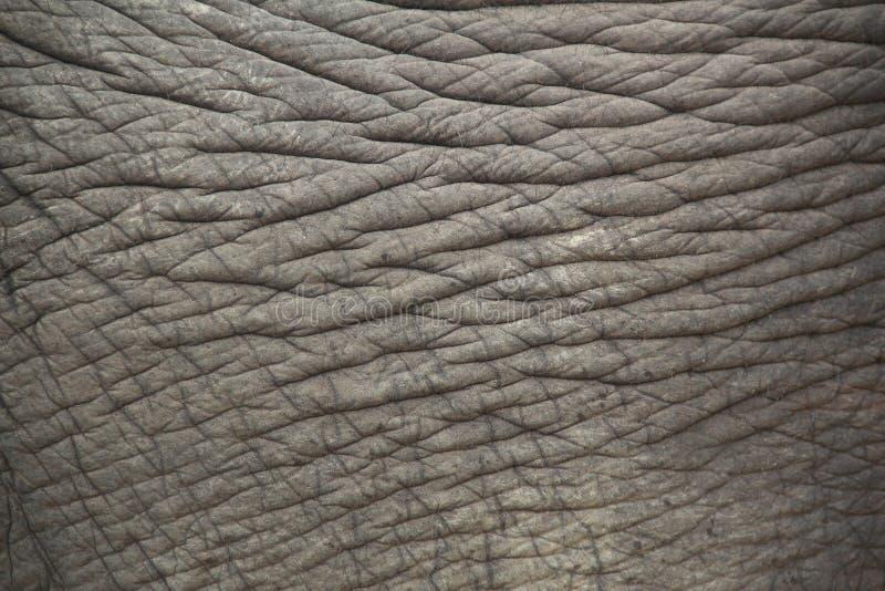 Elefanthaut. lizenzfreie stockfotos