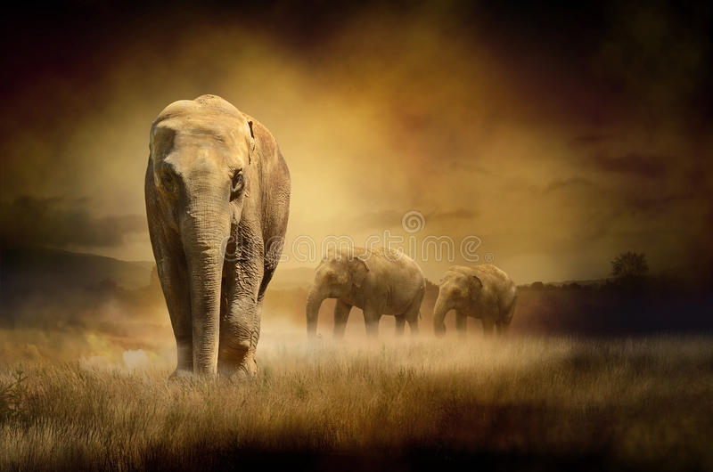 Elefanti al tramonto immagini stock libere da diritti