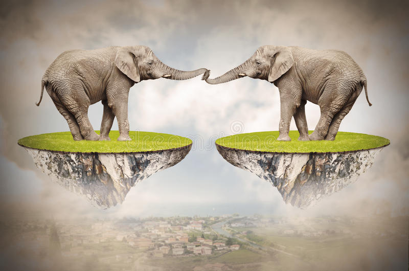 Elefanti amorosi. immagini stock