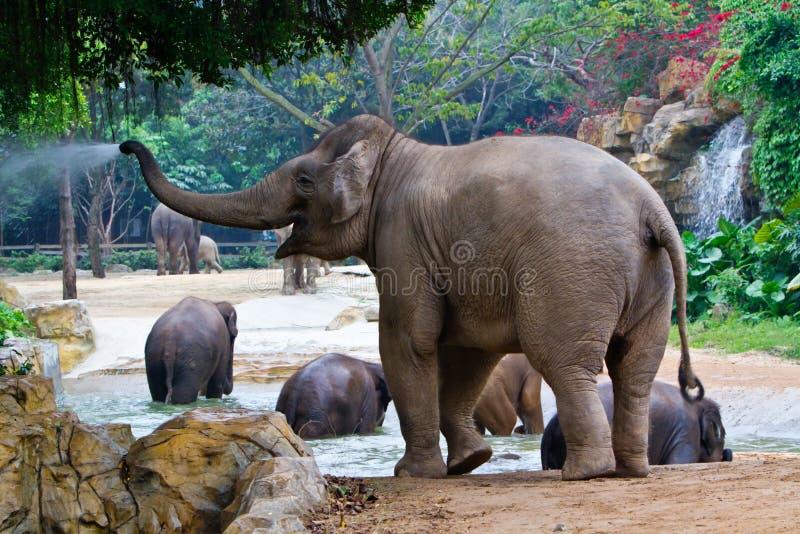 Elefanti che giocano acqua fotografia stock libera da diritti