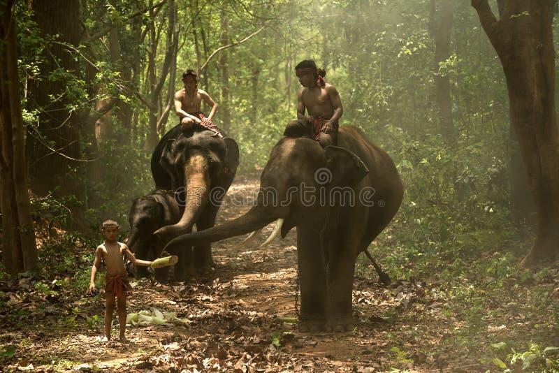 Elefanti con la gente immagini stock libere da diritti