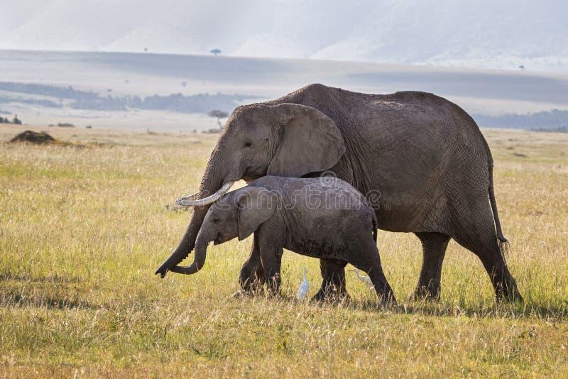 Elefanti del bambino e della madre in Masai Mara fotografia stock libera da diritti