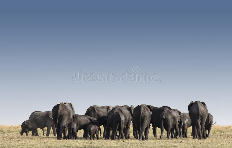 Elefanti nel parco Etosha in Namibia, Africa fotografia stock