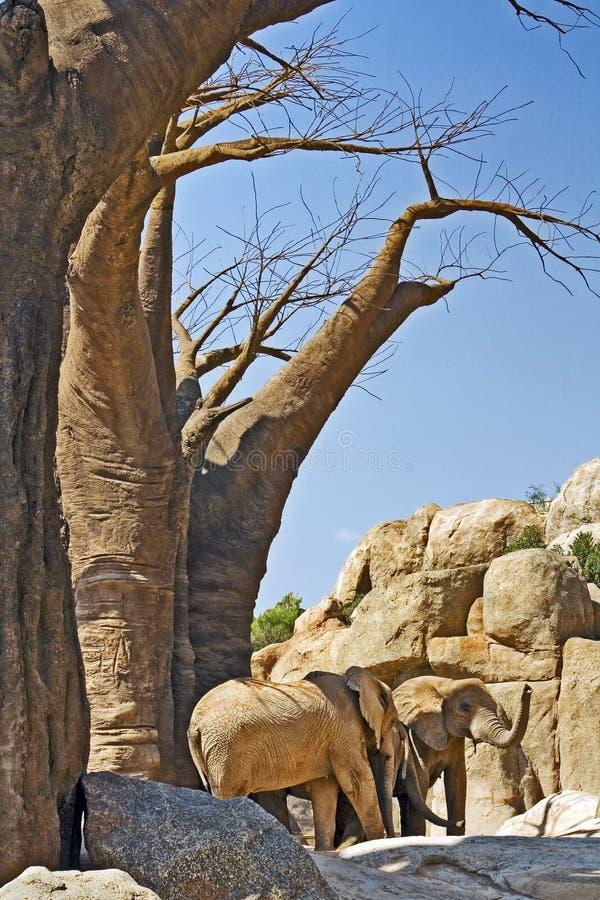 Elefanti sotto un grande albero del baobab immagini stock libere da diritti