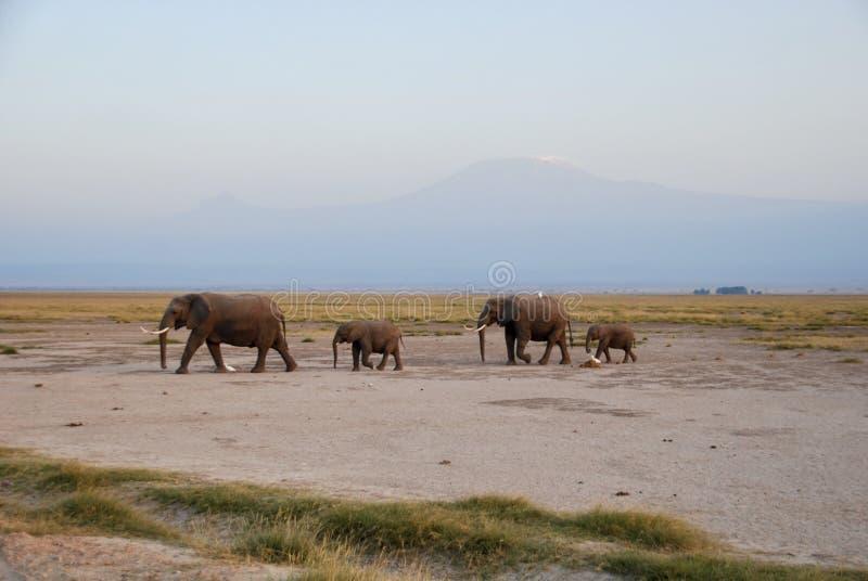 Elefanti sulla pista immagini stock
