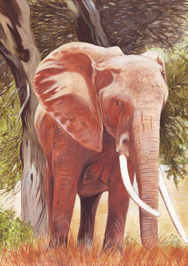 elefantillustration vektor illustrationer