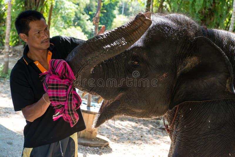 Elefantinstruktörkares om den lilla elefant-kalven för kyss royaltyfria foton