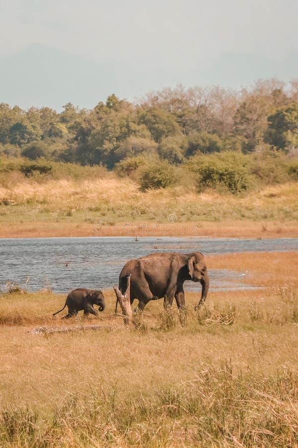Elefantkind mit Mutter lizenzfreie stockbilder