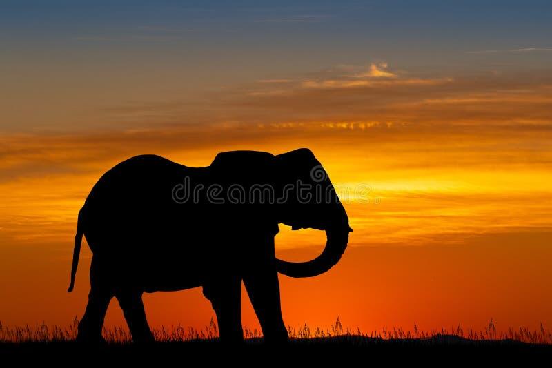 Elefantkontur p? solnedg?ngen stock illustrationer
