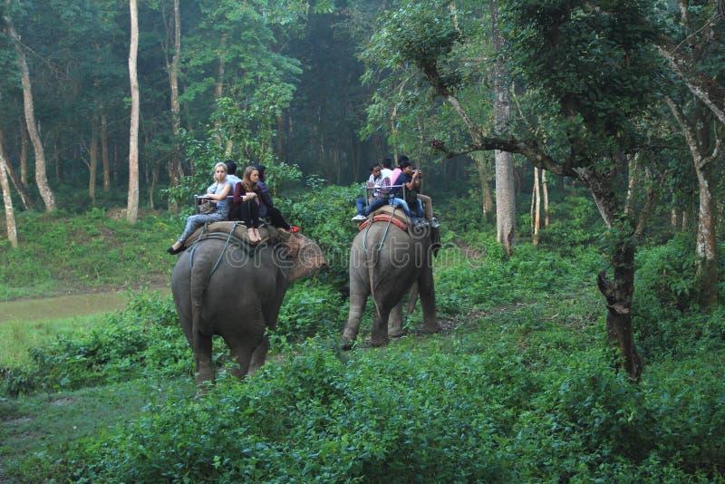 Elefantritt i Nepal. fotografering för bildbyråer