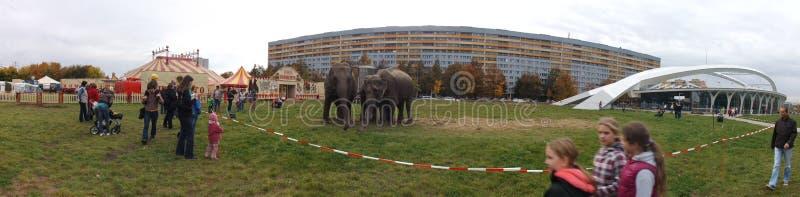 Elefants在城市 免版税库存照片