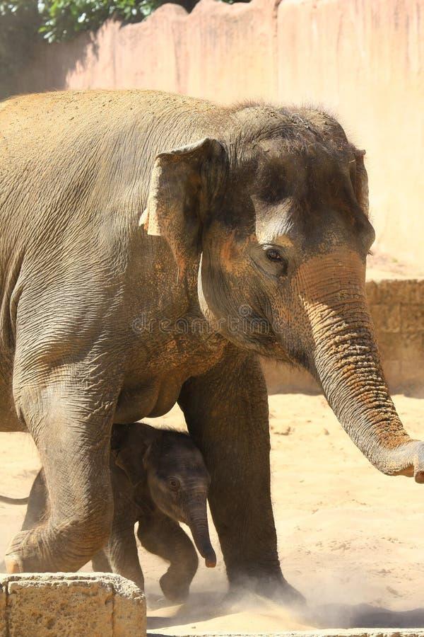 Elefants fotos de archivo libres de regalías