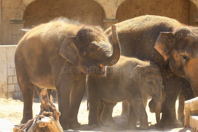 Elefants fotografía de archivo libre de regalías